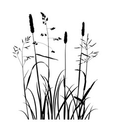 Wild cereal plants vector