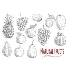 Natural fruits sketches for vegetarian food design vector