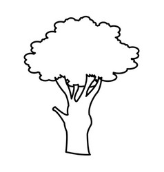 Tree branch trunk stem foliage botanical vector