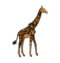 giraffe animal herbivore african wildlife vector image vector image