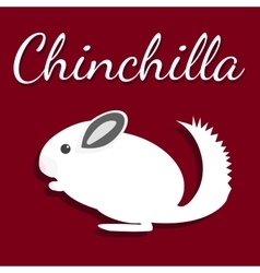 Chinchilla Pet icon in flat vector image vector image