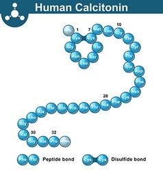 Human calcitonin hormone peptide molecule vector