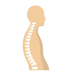 Human spine icon isolated vector
