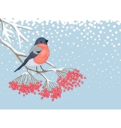 Winter snowy card with bullfinch on the branch of vector image