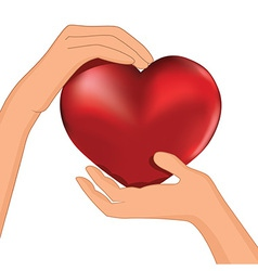 heart inside hands vector image vector image