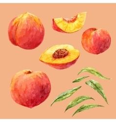 Watercolor hand drawn peach vector