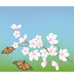 cherry branch and butterflies vector image