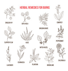 Collection of herbs for burns vector