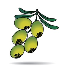 Freehand drawing olive icon vector image vector image