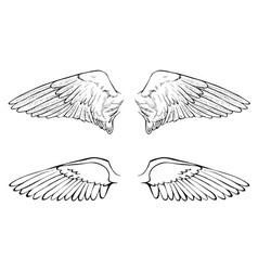 Two wings vector