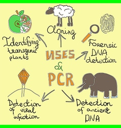 uses of pcr handdrawn vector image