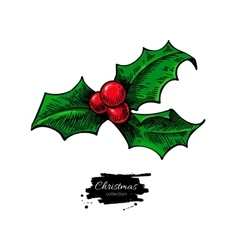 Christmas mistletoe holly berry with leaves hand vector