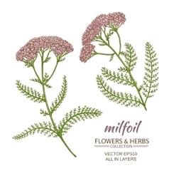 milfoil set vector image vector image