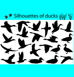silhouettes of ducks vector image vector image