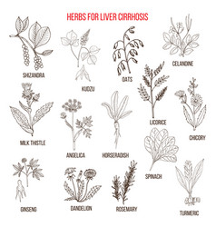 Best herbal remedies for liver cirrosis vector