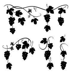 bunch of grapes - set of few decorative elements vector image