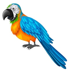 Parrot with yellow and blue feather vector