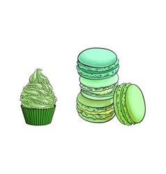sketch matcha flavor macaroni cupcake vector image