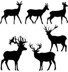 Deer and roe silhouettes on the white background vector