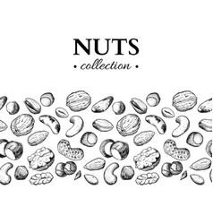 nuts vintage hand drawn vector image vector image