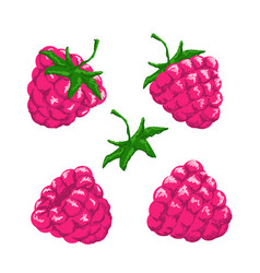 raspberry berries set vector image vector image