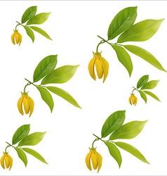 Ylang-ylang flower vector