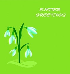 Easter snowdrops vector