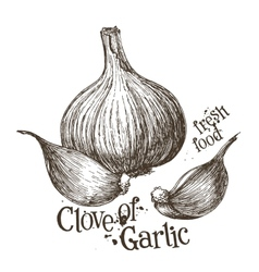 Garlic logo design template fresh vector