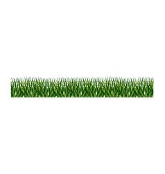 fresh green grass field vector image