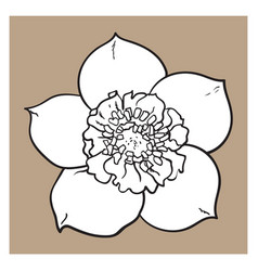 Hellebore christmas rose single flower top view vector