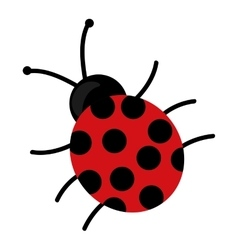 cute beautiful ladybug isolated vector image
