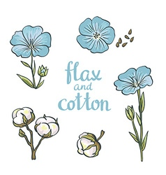 Hand drawn flax and cotton design isolated on vector