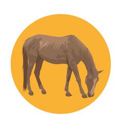 Horse eating grass vector