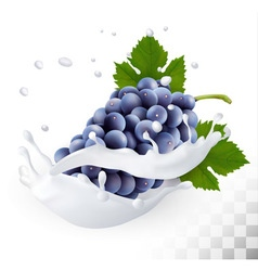 Blue grapes in a milk splash on a transparent vector