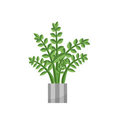 Fernhouse plant realistic icon for interior vector