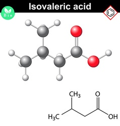 Isovaleric acid molecule vector image vector image