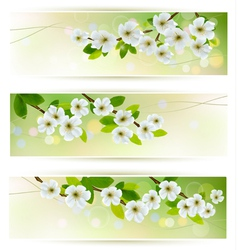Three banners with blossoming tree branches vector image