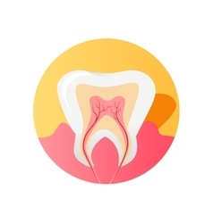 Icon of the Tooth in a Cut Isolated vector image vector image