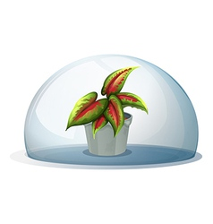 A dome with a plant inside a gray pot vector