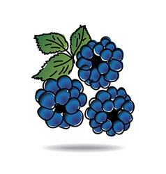 Freehand drawing dewberry icon vector