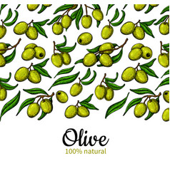 olive oil label hand drawn of vector image