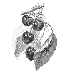 Variety of fruit vintage vector
