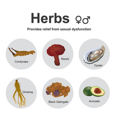 Herbs sexual dysfunction vector