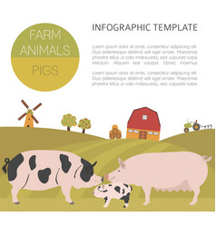 pig farming infographic template hog sow pig vector image