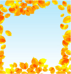 Yellow leaves fall background vector