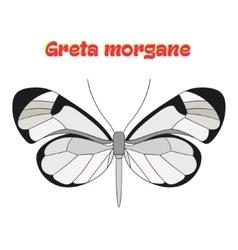 Butterfly greta morgane vector