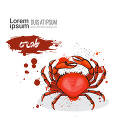 Crab hand drawn watercolor sea food on white vector