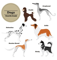 Image set of dogs Greyhound Russian hound Husky vector image