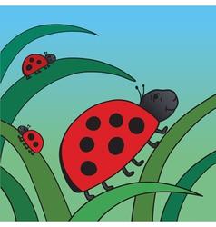 Ladybirds vector