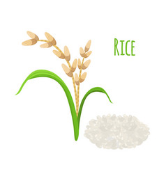 rice plant vegetarian food harvest oryza wheat vector image vector image